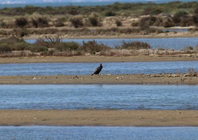 2017-Spanien-Eucaliptus-Ausflug-IMG_0315